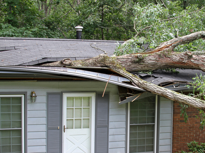 An white oak tree falls on a small house and tears it apart