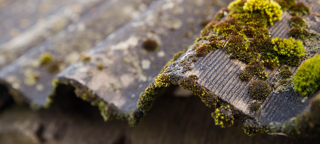 How to Keep Your Asphalt Shingles Free from Algae